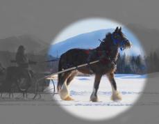 placid-horse copy
